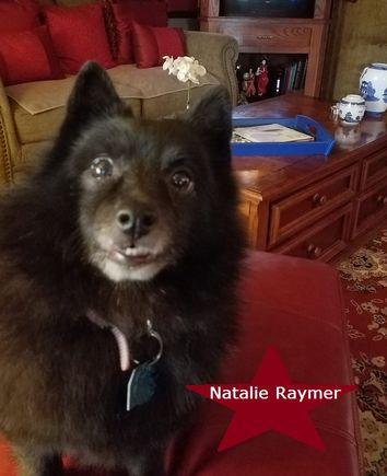 A small fluffy black dog named Natalie