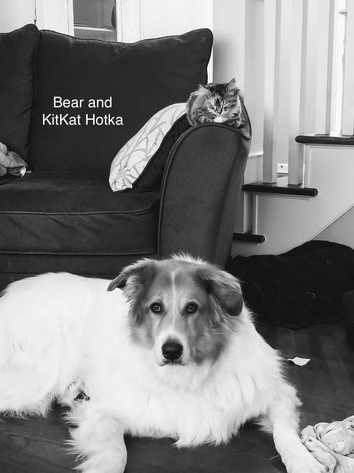 A large fluffy dog named Bear and a cat named KitKat
