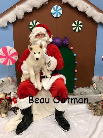 A white dog named Beau sitting on Santa's lap