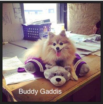 A fluffy Pomeranian named Buddy