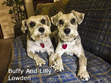 Two Schnauzers named Buffy and Lilly