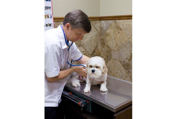 Dr. Wegele examining a small fluffy white dog