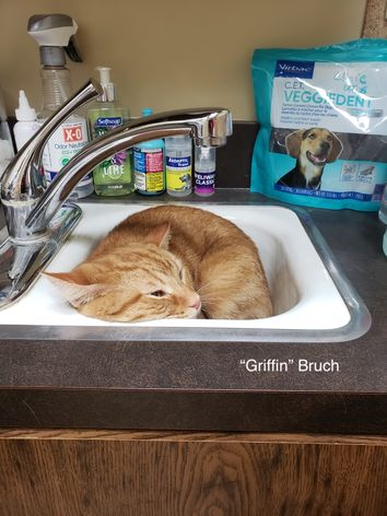 An orange cat named Griffith snuggled in a sink