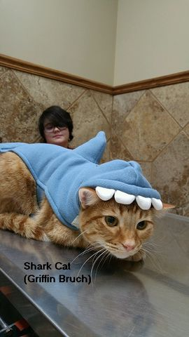 A orange cat named Griffin dressed up in a shark costume