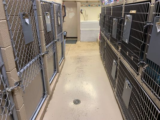 The large dog kennels